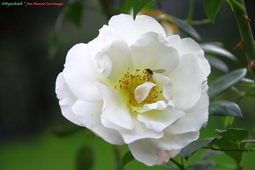 Rosa #Photography 025