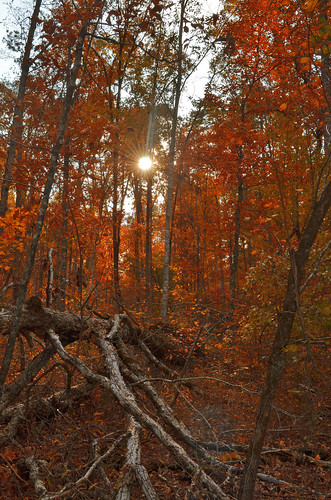 Trees are ablaze with fall color by Jeka World Photography
