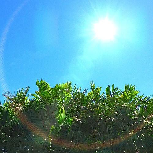 Bright and sunny in the backyard. #iphone4s #picoftheday #lensflare #photographyeveryday #awesomeshots #sunshine #photooftheday #igersasia #igersjapan #igersmanila #philippines #manila #instago #instamood #instamood