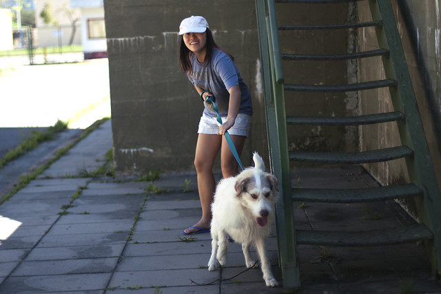 Buenos Aires - Dog shelter