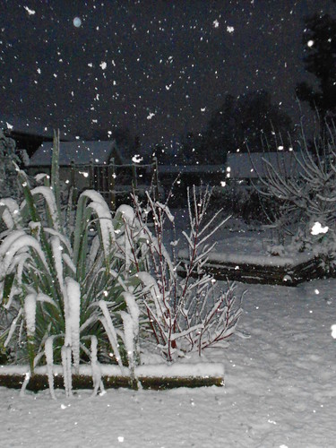 Snow in the garden