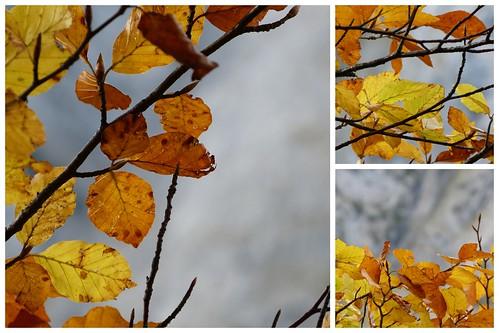 Ahornboden 2012-10-14