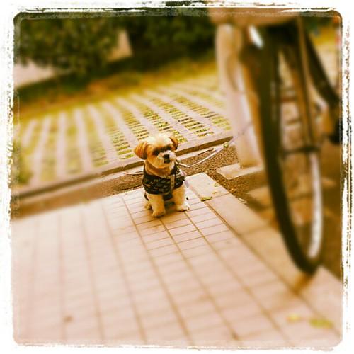 近所のコンビニで、お留守番してた。 by kuma.kigurumi