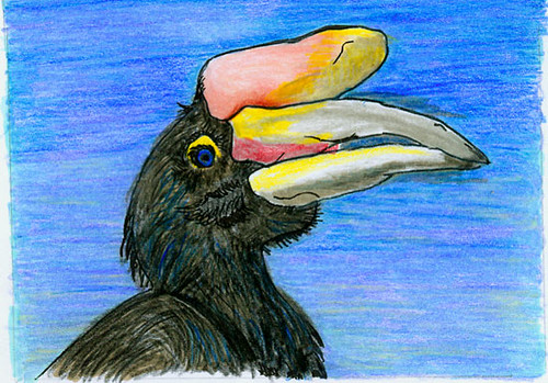 Hornbill with Coloured pencils