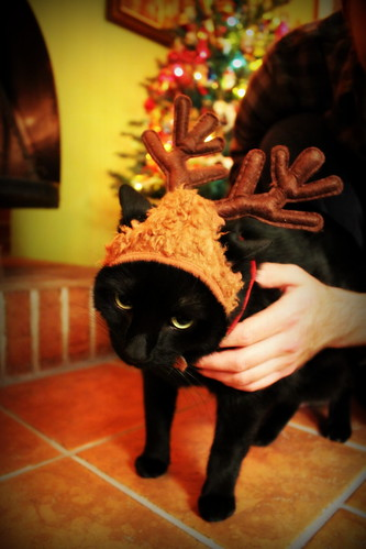 20121208. Boombox hates everyone when we put the antlers on him.