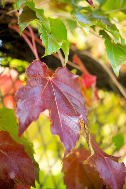 121028_coloredleaves