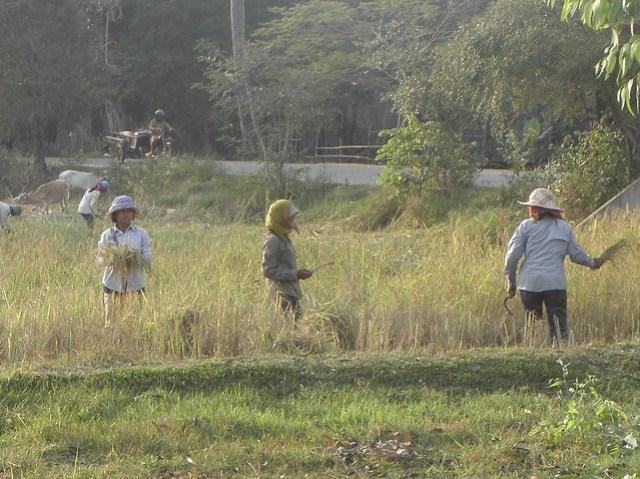 Farming near Siem Reap, Cambodia