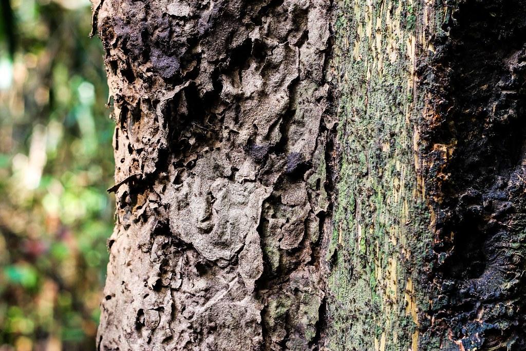 Ants - Amazon, Brazil
