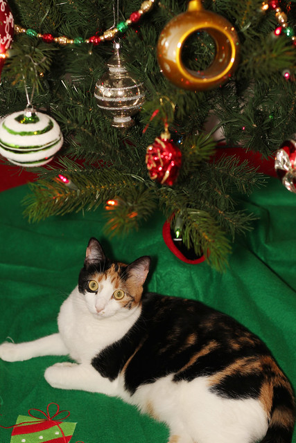 Maeby under the Christmas tree