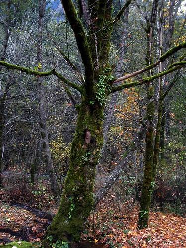 tree near hartman pond