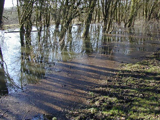 Dscn2413-flooded-trees-sidelight