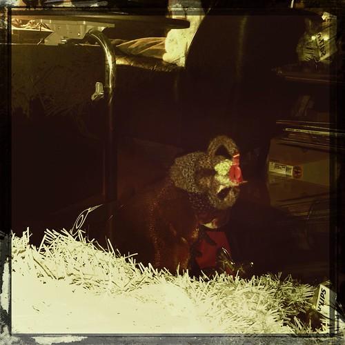 hipstajake-mistletoe08