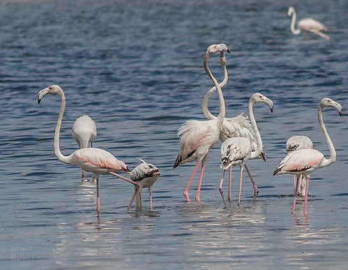 Romancing Birds by Balavasakan