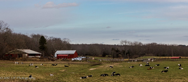 2012_Nov_25_Dairy Farm_007