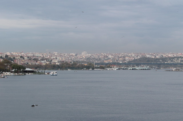 Sea creatures in the Golden Horn