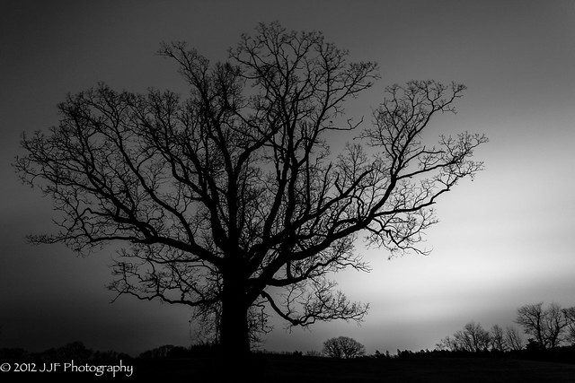 2012_Nov_12_Tree Silhoutte_014