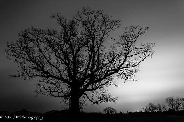 2012_Nov_12_Tree Silhoutte_014