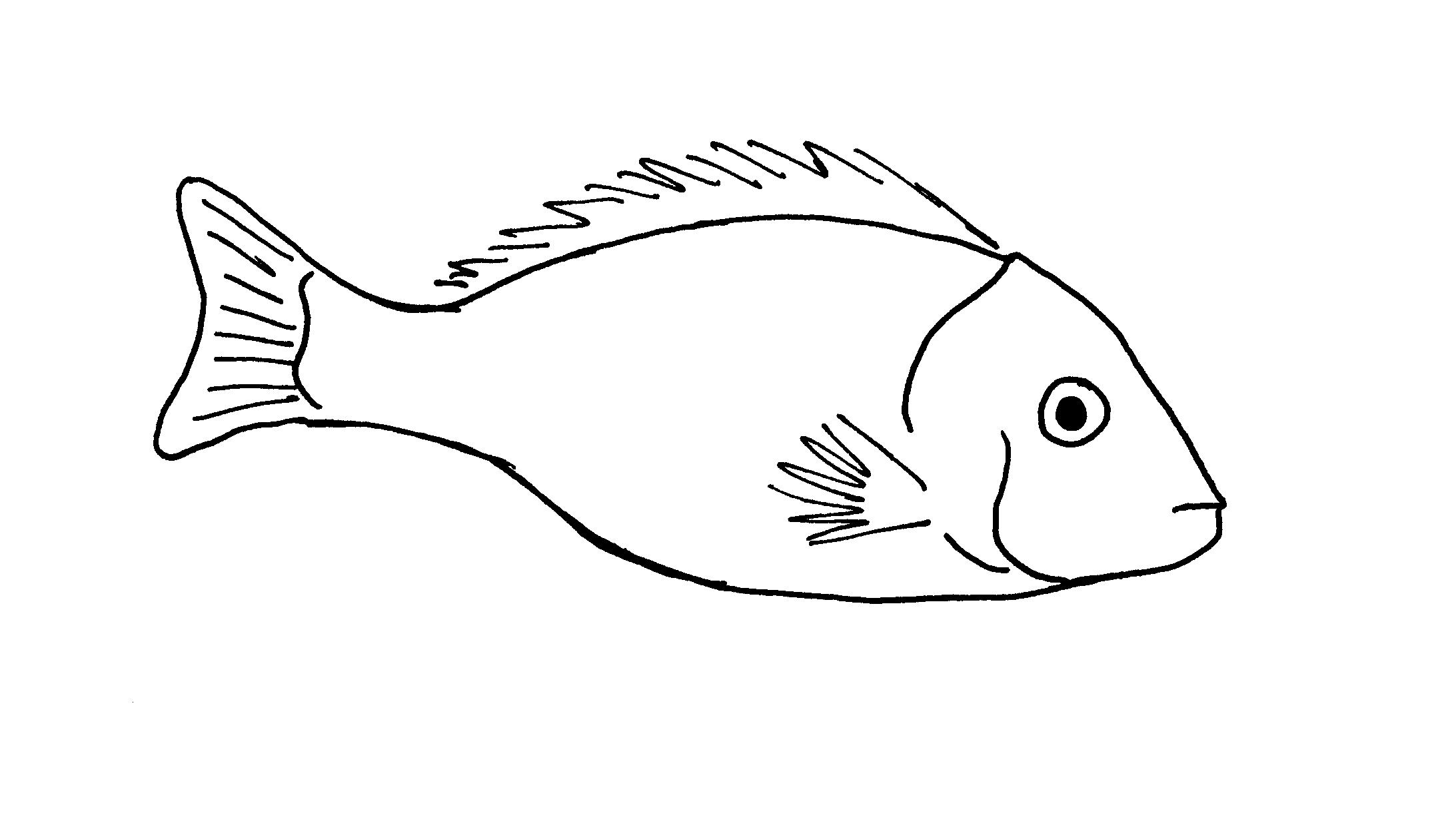 Line Drawing Of A Fish Flickr
