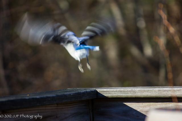 2012_Nov_09_Bird_004