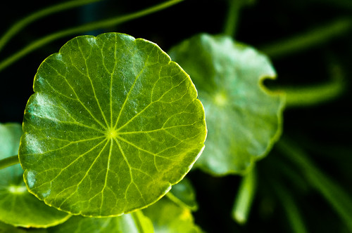 Leafage