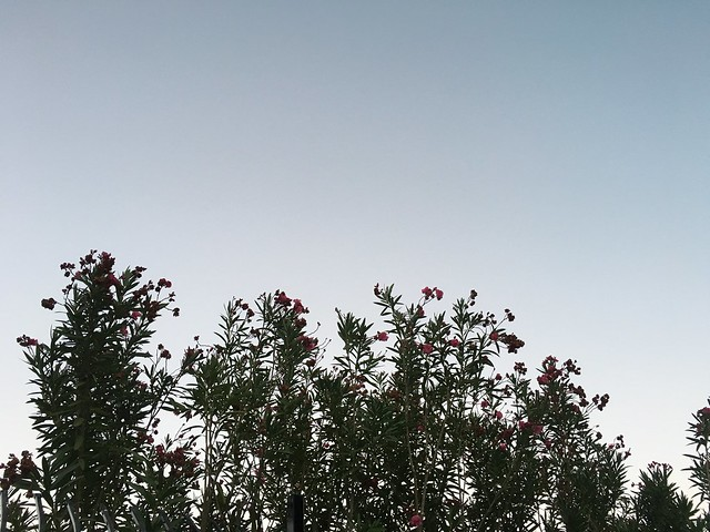 Eveninglightpoolside