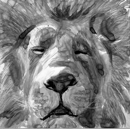 Lion by husdant