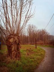 Délimitation du terrain : le frêne