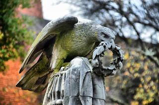 Christ Church Hawk