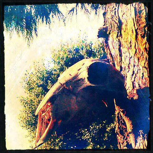 Skull Forest by deadheaduk