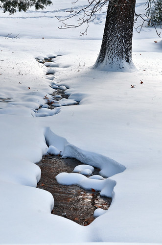 Snowy Stream by Jeka World Photography