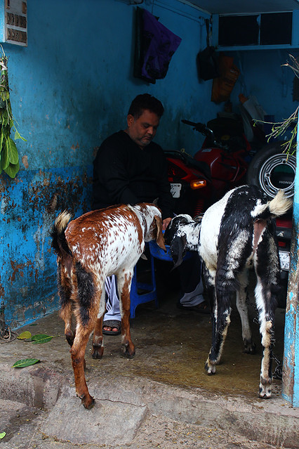 A man feeding two goats in his own shop