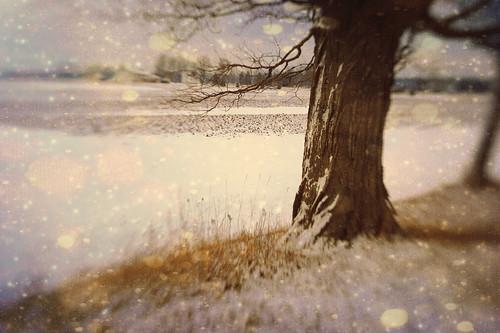 winter wonderland by jumpinjimmyjava