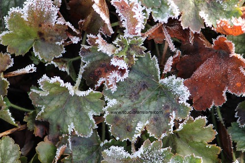 Frost Edged