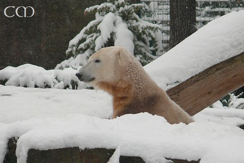 Knut, 31 December 2009