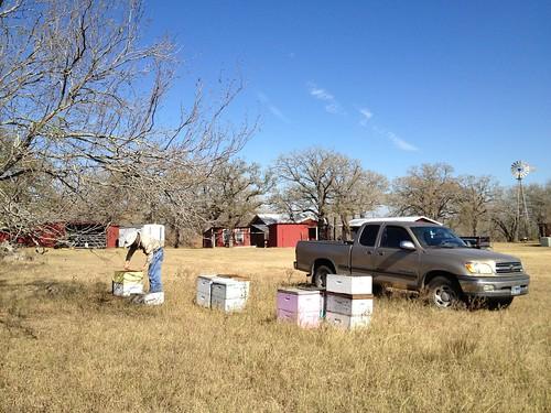 Nash Creek yard check 2