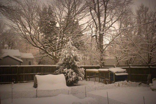 20121228. Snowy evening.