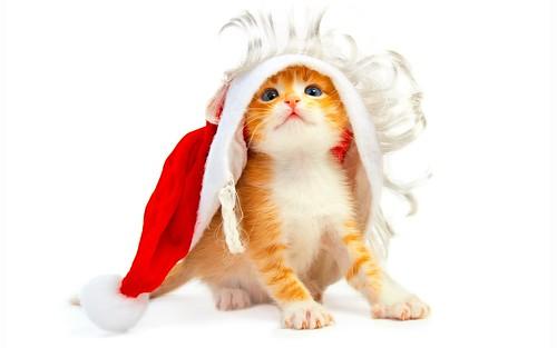 Котенок, новый год, белый фон by Juriy2012