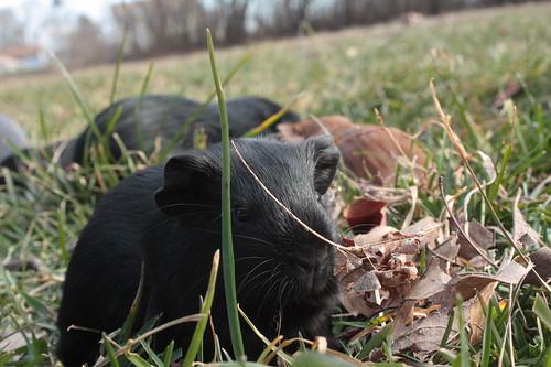 Little Fluffball Snacks on Grass