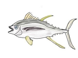 Paint a fish by Grietje 46 yo