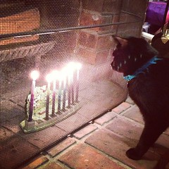 Luna and the Menorah