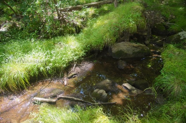 naturist 0005 Harriman park, NY, USA