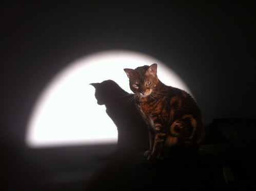 Cat in the spotlight by Fitzrovia