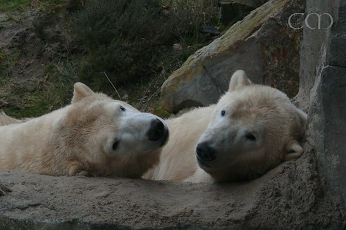 We are VERY cuddly bears, you know.