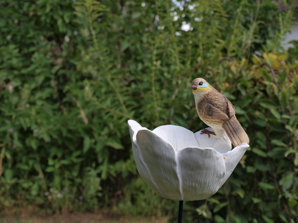 Vogeltränke in unserem Garten