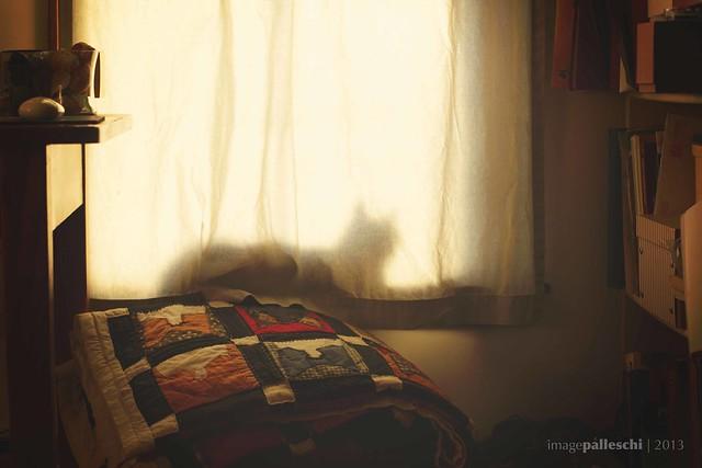 032.365 | silouhette d'un chat