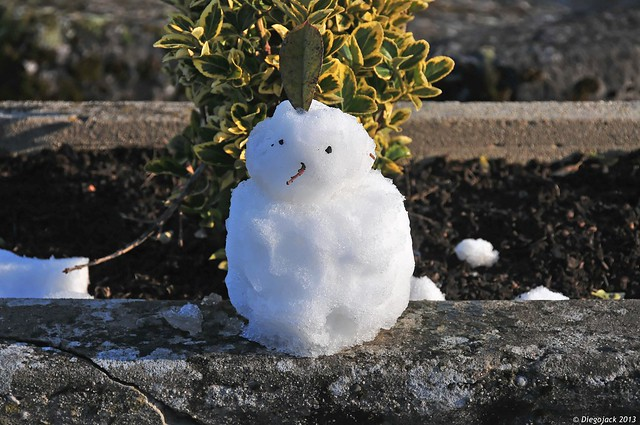 Bonhomme de neige bonzaï