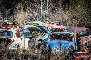Rusty Beetles