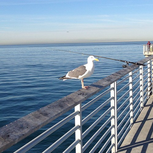 seagull on pier