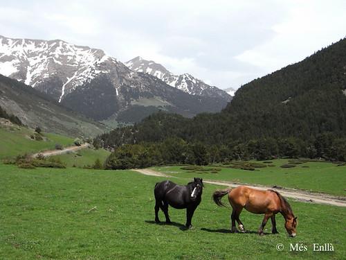 Paisatge de la Vall d'Aran amb uns cavalls