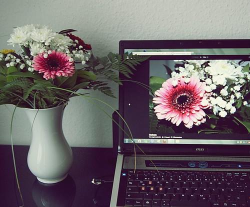 Blumengruß Explore (06.02.2013)